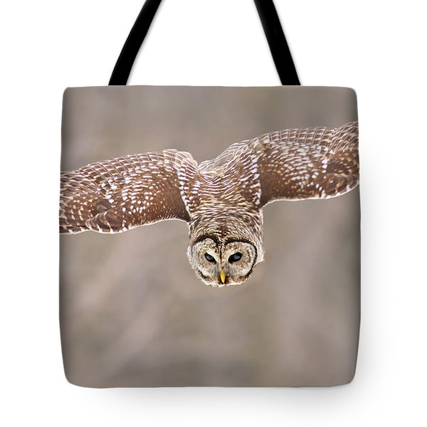Hunting Barred Owl  Tote Bag by Mircea Costina Photography