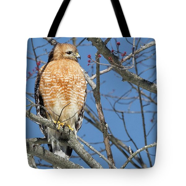 Tote Bag featuring the photograph Hunting by Bill Wakeley