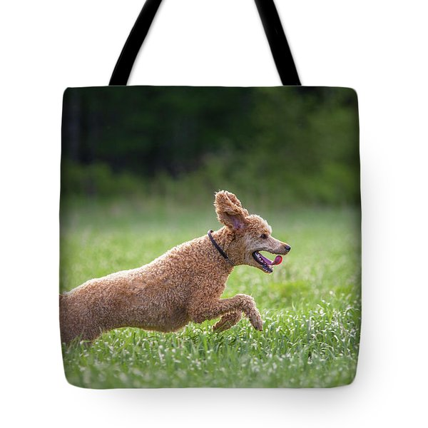 Hunting Dog Tote Bag by Teemu Tretjakov