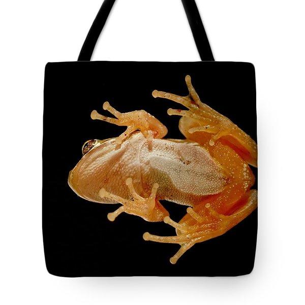 Hunting On Glass - Tree Frog Tote Bag