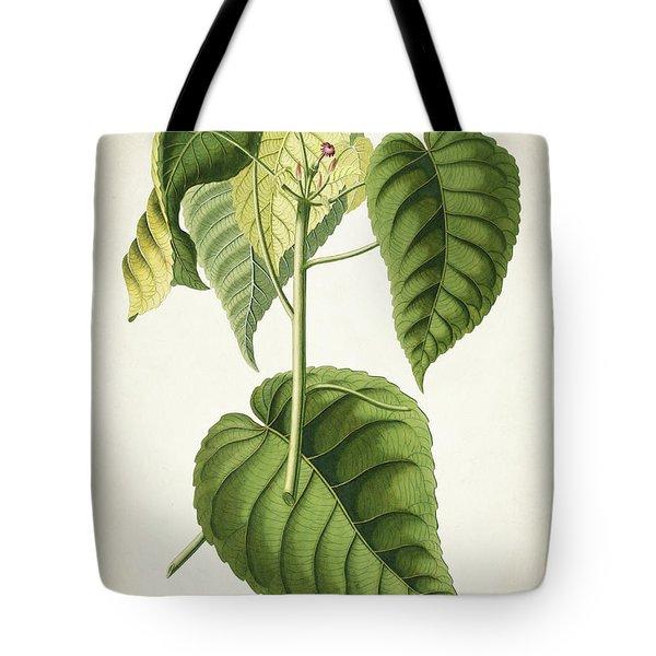 Hura Botanical Print Tote Bag
