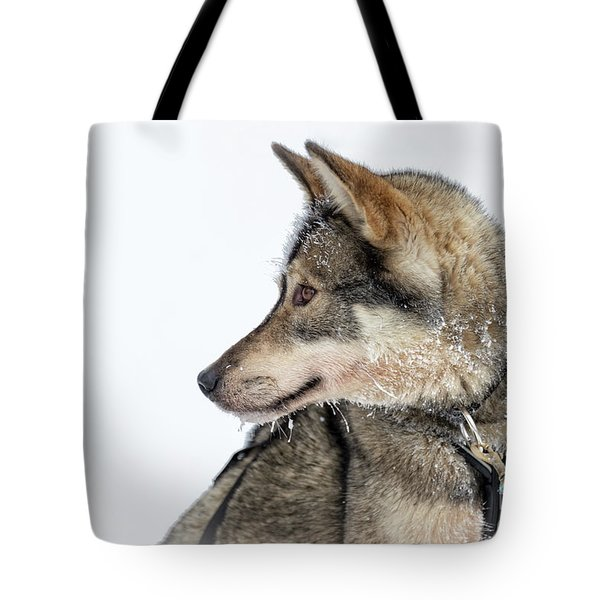 Tote Bag featuring the photograph Husky Dog by Delphimages Photo Creations