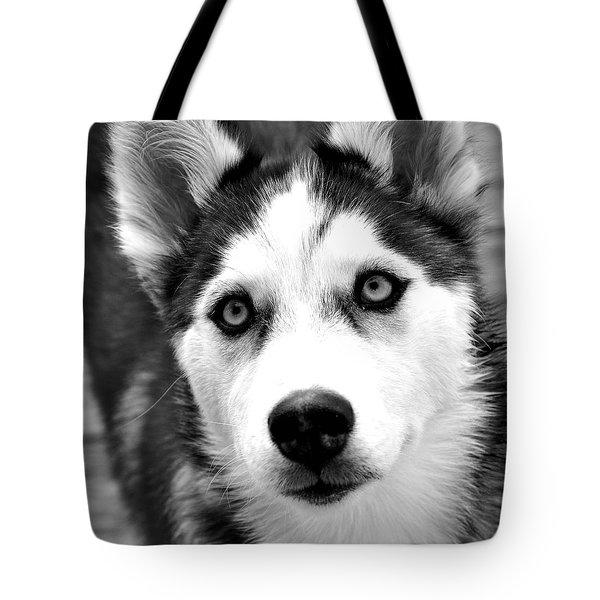 Husky Pup Tote Bag by Sumit Mehndiratta