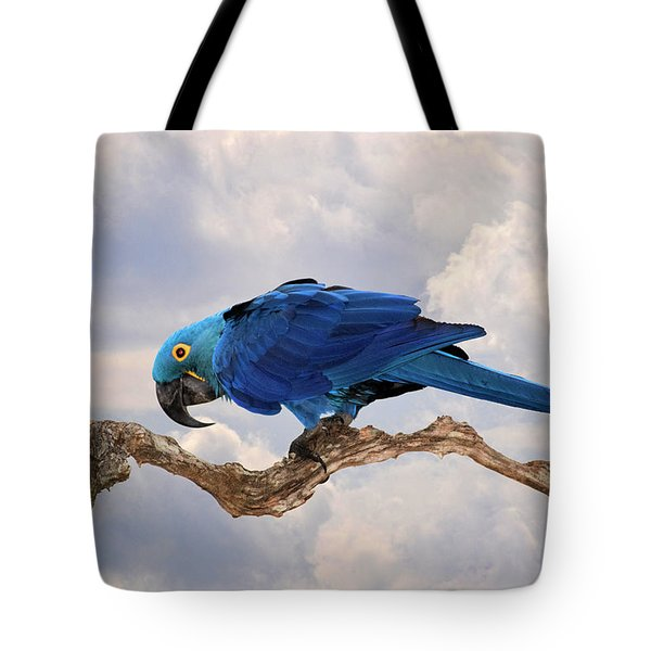 Hyacinth Macaw Tote Bag by Wade Aiken