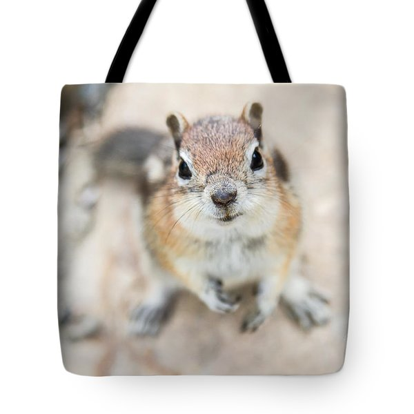 Hypno Squirrel Tote Bag by Chris Scroggins