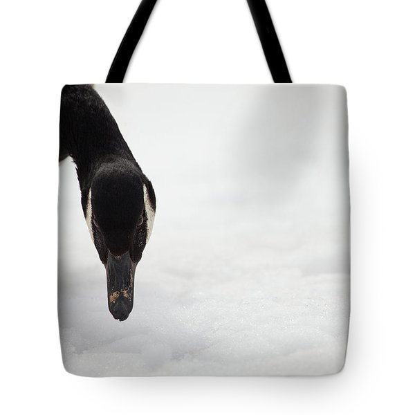 Tote Bag featuring the photograph I Do See You by Karol Livote