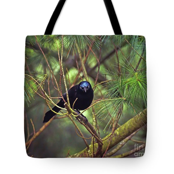 Tote Bag featuring the photograph I Have My Eyes On You - Grackle In The Pines by Kerri Farley