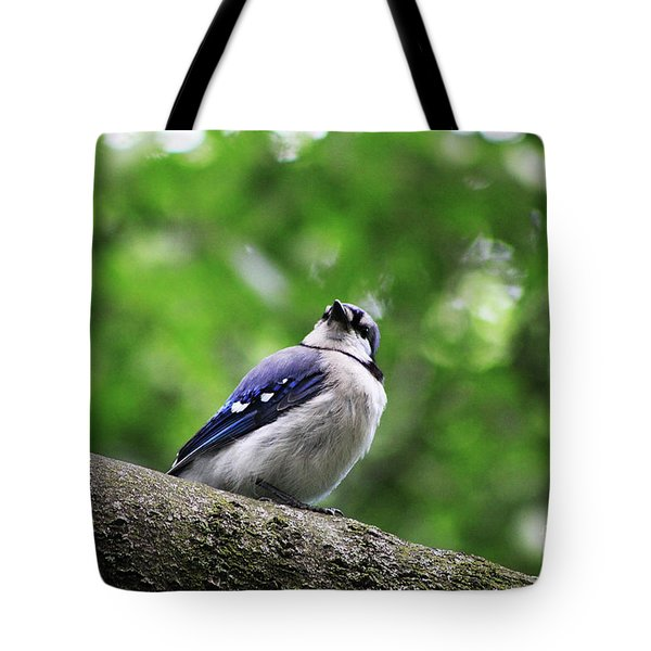 Tote Bag featuring the photograph I Hear Something by Alyce Taylor