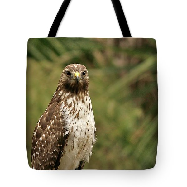 I See You Tote Bag by Phill Doherty