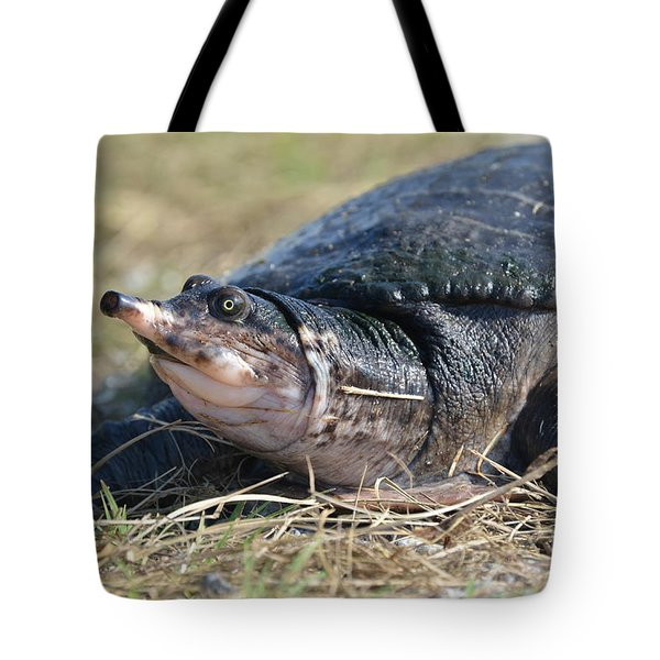 Tote Bag featuring the photograph I Think It Adds Character by Kathy Gibbons