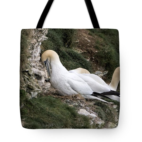 I Told You So  Tote Bag by David  Hollingworth