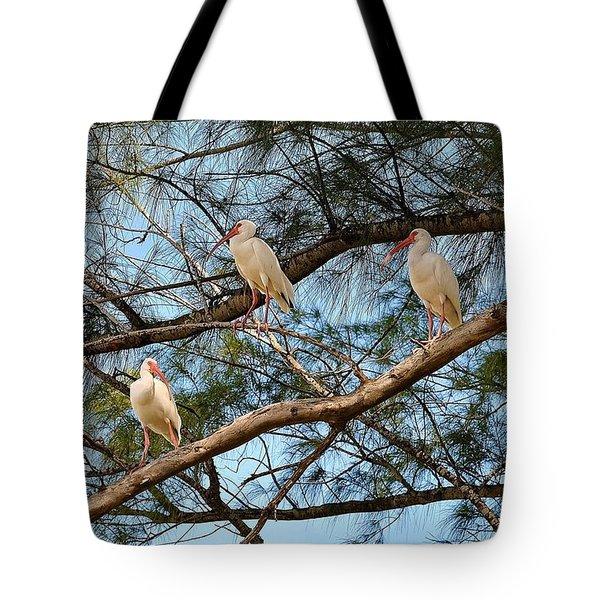 Ibis I May, Ibis I Might... Tote Bag