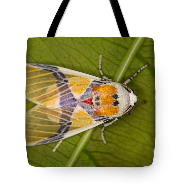 Idalus Carinosa Moth Tote Bag