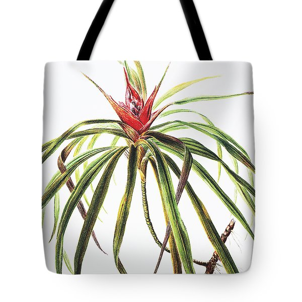 Ieie Plant Tote Bag by Hawaiian Legacy Archive - Printscapes
