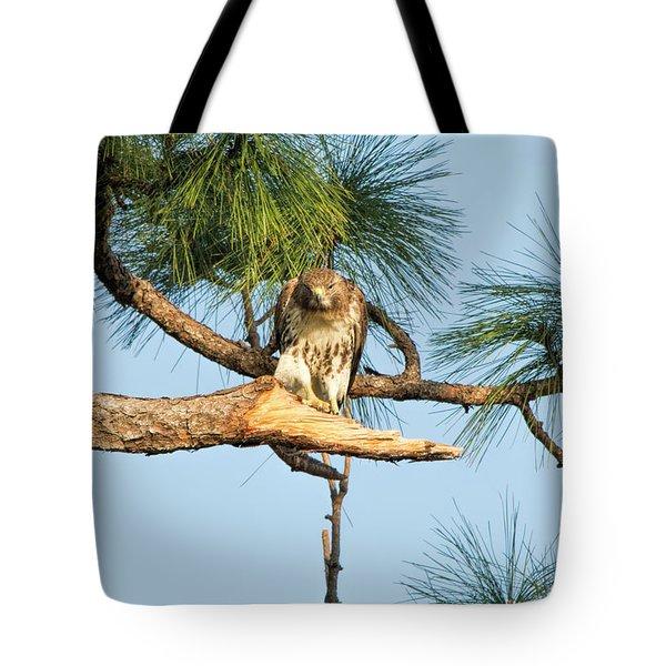 If Looks Could Kill - Hawk Tote Bag