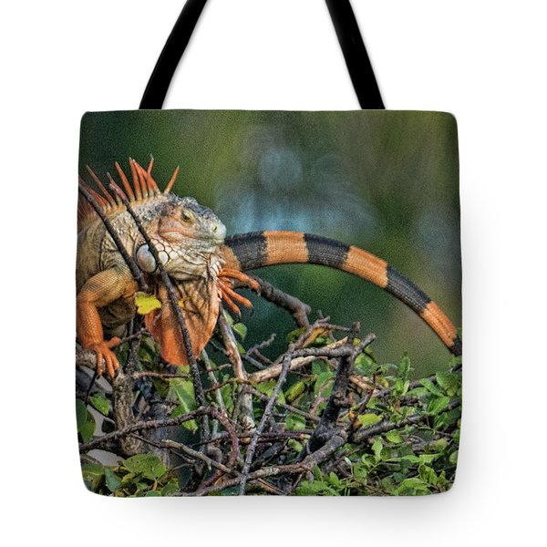 Tote Bag featuring the photograph Iggy by Don Durfee