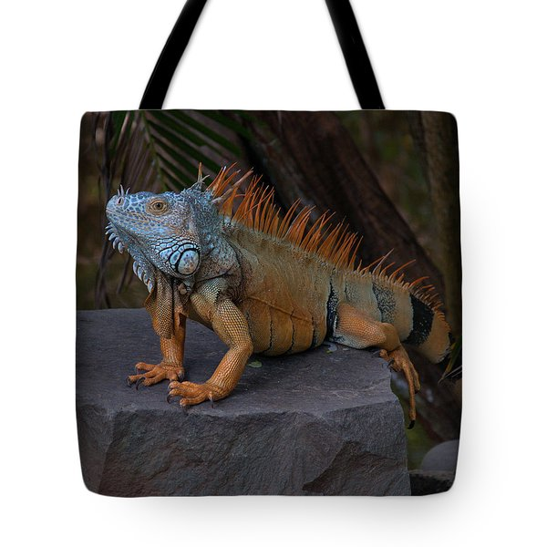 Tote Bag featuring the photograph Iguana 2 by Jim Walls PhotoArtist