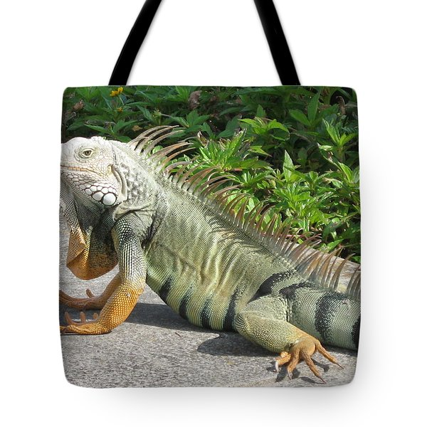 Tote Bag featuring the photograph Iguania Sunbathing by Christiane Schulze Art And Photography
