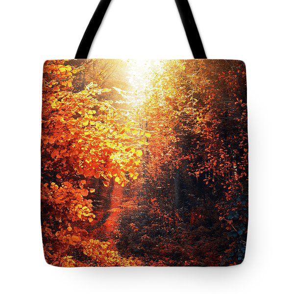 Illuminated Forest Tote Bag by Wim Lanclus