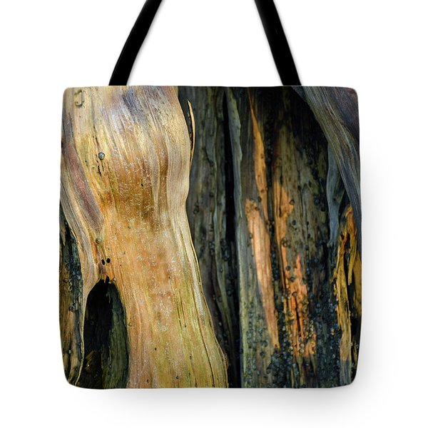 Illuminated Stump 03 Tote Bag by Bruce Gourley