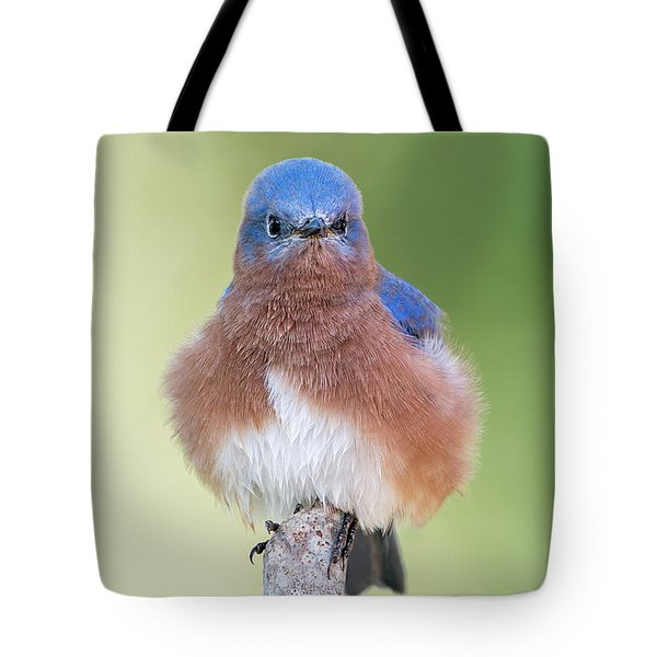 I May Be Fluffy But I'm No Powder Puff Tote Bag