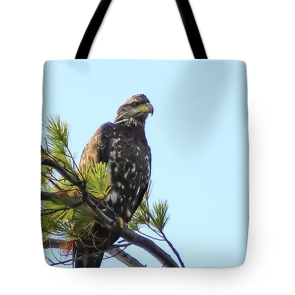 Immature Bald Eagle 1 Tote Bag