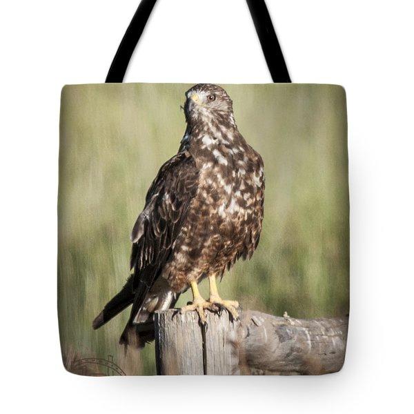Immature Northern Harrier Tote Bag by Daniel Hebard