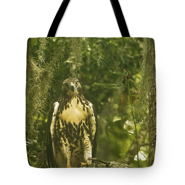 Immature Red-tail Hawk Tote Bag by Phill Doherty