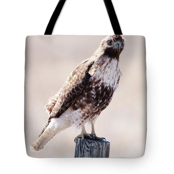 Immature Red Tailed Hawk Tote Bag