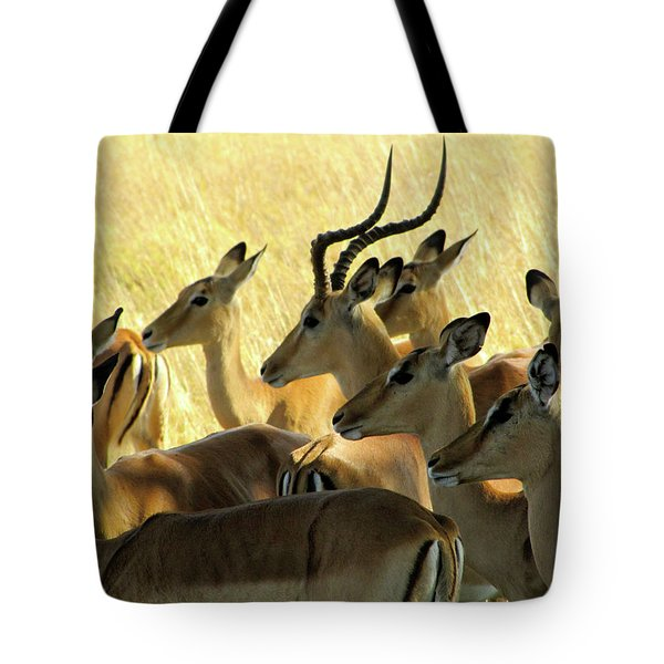 Impalas In The Plains Tote Bag