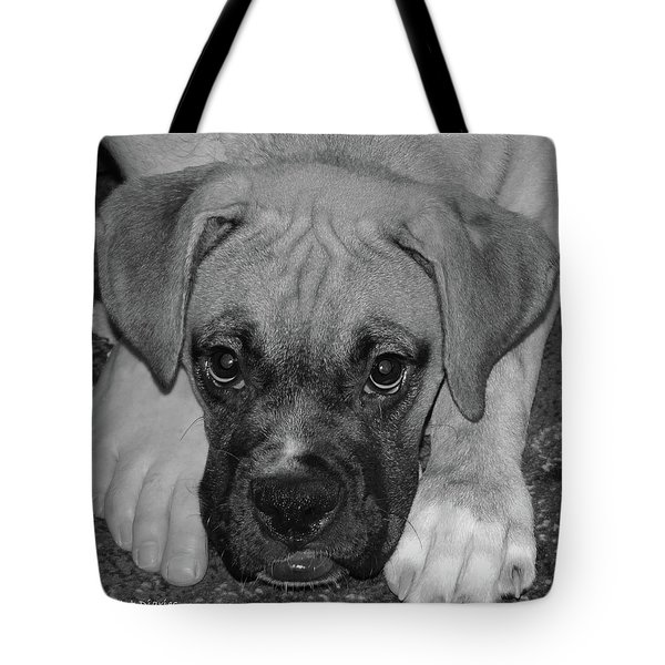 Impawsible Tote Bag by DigiArt Diaries by Vicky B Fuller