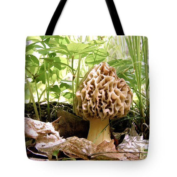 In Hiding - Morel Mushroom Tote Bag by Angie Rea