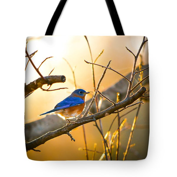 In The Light Tote Bag by Shelby  Young