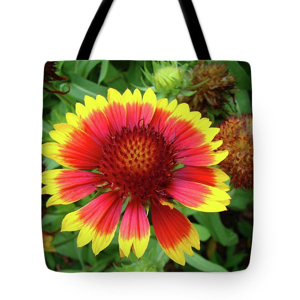 Indian Blanket Flower Tote Bag