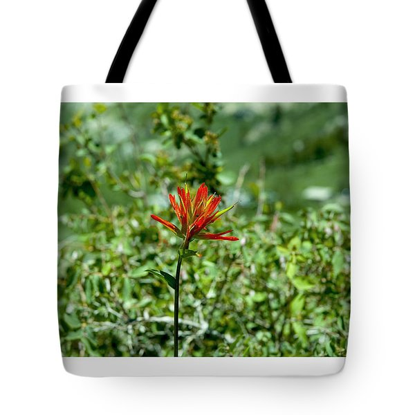 Indian Paint Brush Tote Bag by R Thomas Berner