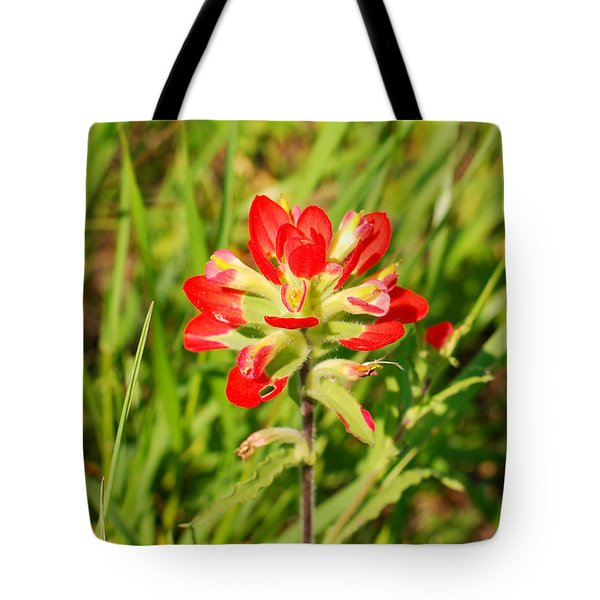Indian Paintbrush Close Up Tote Bag