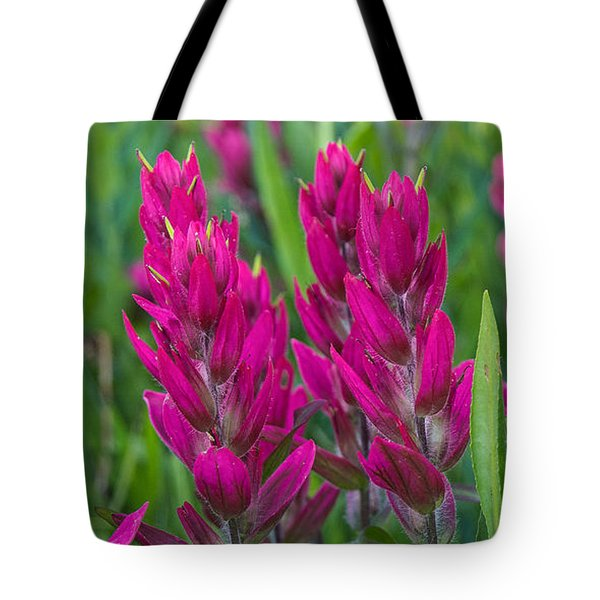 Tote Bag featuring the photograph Indian Paintbrush Vertical by Aaron Spong