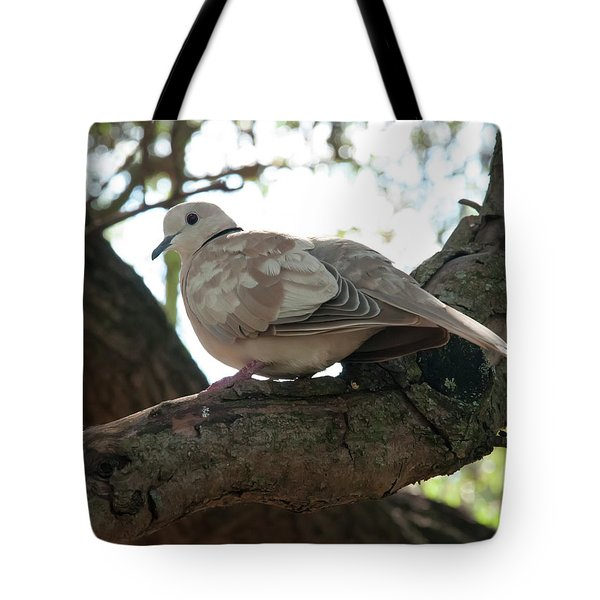 Tote Bag featuring the photograph Indian Ringneck Dove by Chris Flees