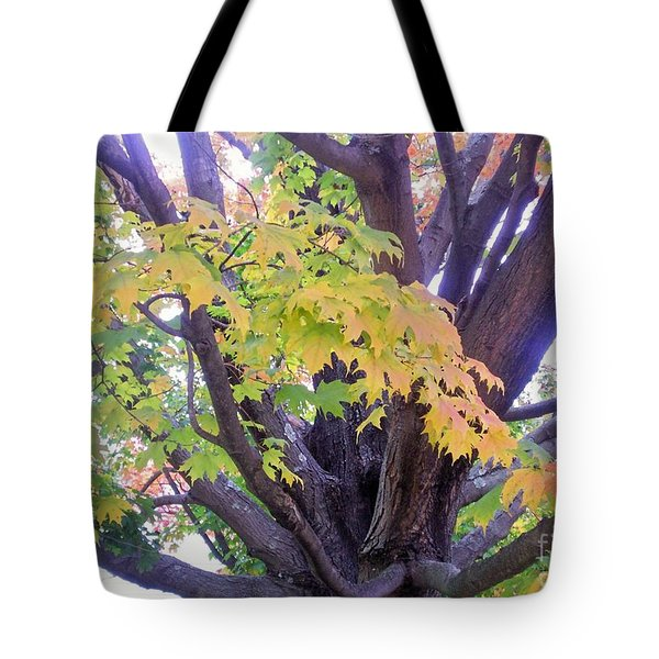 Indian Tree Tote Bag