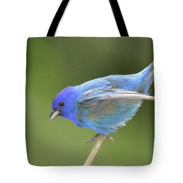 Indigo Bunting Rock Tote Bag