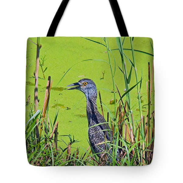 Inmature Black Crowned Heron. Tote Bag