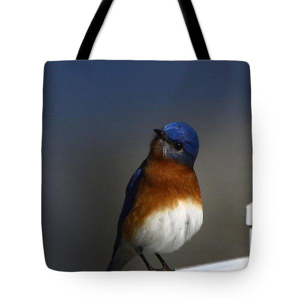Inquisitive Bluebird Tote Bag
