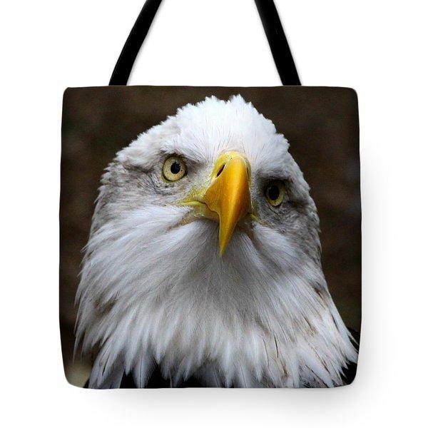 Inquisitive Eagle Tote Bag