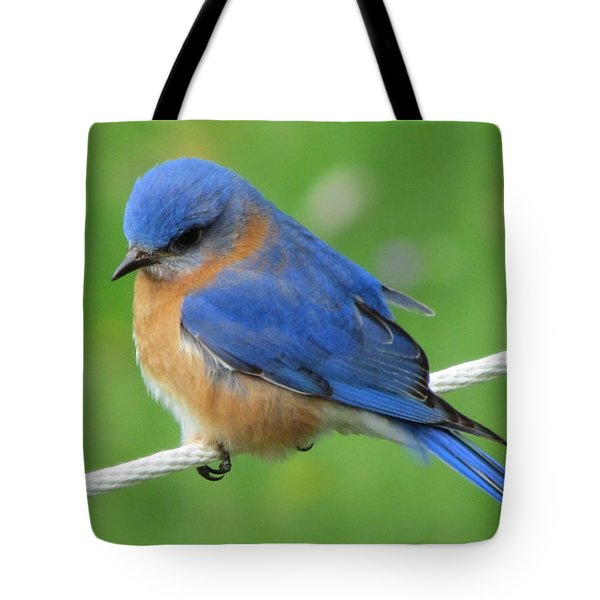 Intense Blue Bird Tote Bag