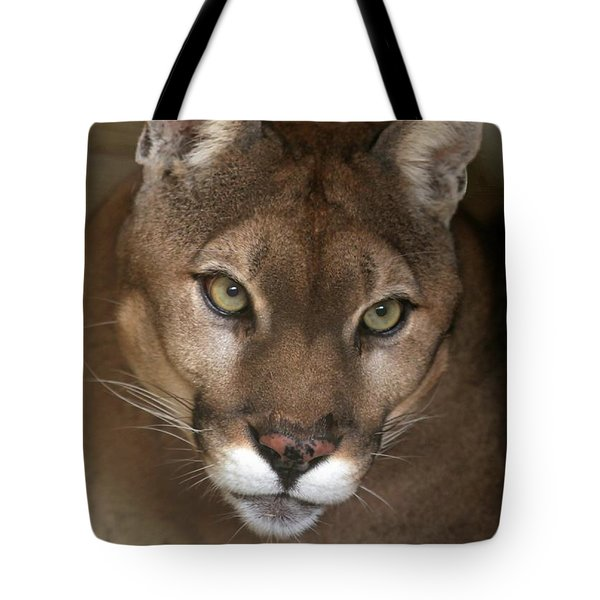 Intense Cougar Tote Bag by Sabrina L Ryan