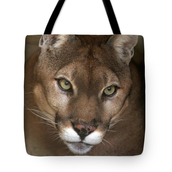 Tote Bag featuring the photograph Intense Cougar by Sabrina L Ryan