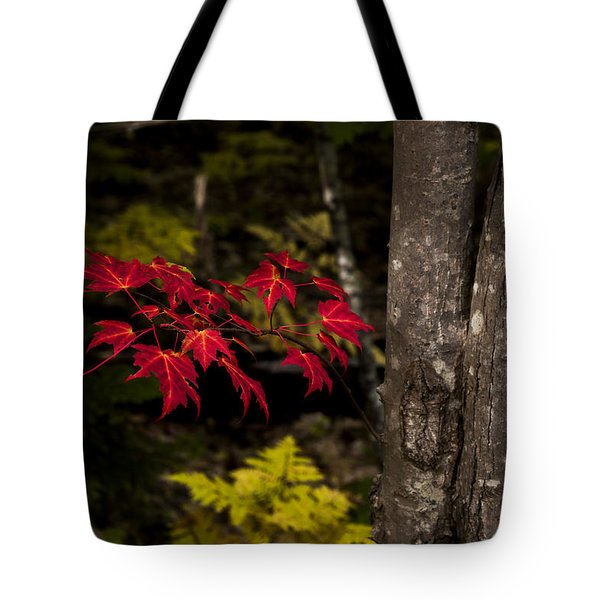 Tote Bag featuring the photograph Intensity by Chad Dutson
