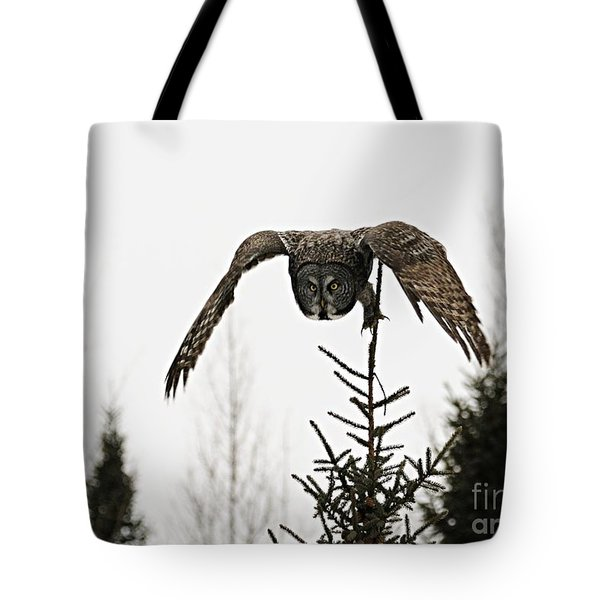 Tote Bag featuring the photograph Intent On His Prey by Larry Ricker