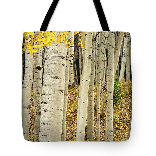 Tote Bag featuring the photograph Into The Forest by Gary Lengyel