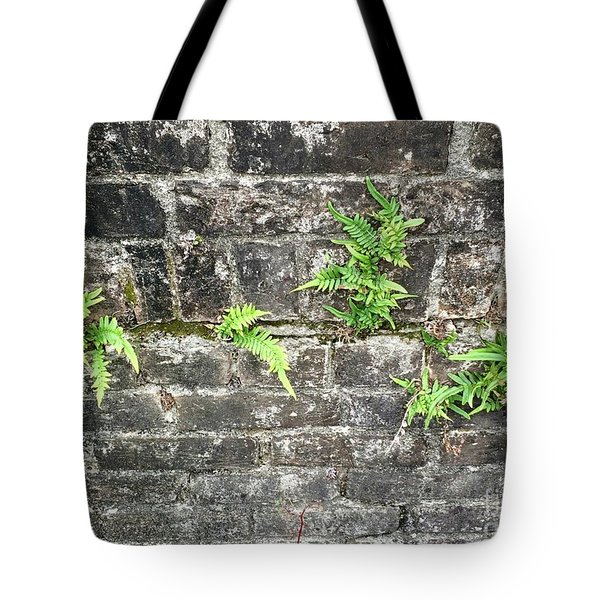 Tote Bag featuring the photograph Intrepid Ferns by Kim Nelson